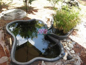 outdoor fish pond