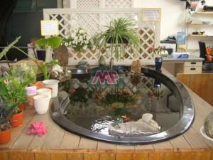KOI fish tank