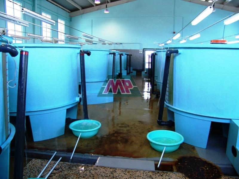 hatchery tanks